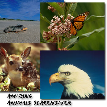 Amazing Animals Screen Saver and Wallpaper by Tazmaniacs Screen Savers.